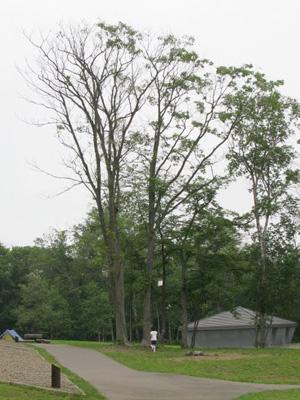 タンジェントハイトゲージで計った木 (1)