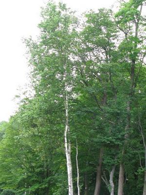 タンジェントハイトゲージで計った木(2)