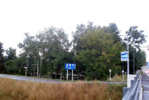 堤防沿いのコウモリのいそうな木々